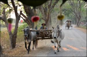 7 Objazd rodzinnej wsi